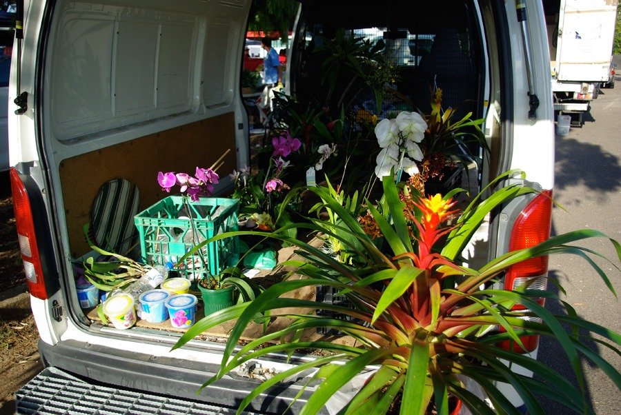 orchids-and-plants-for-sale
