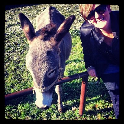 Chasing the Donkey